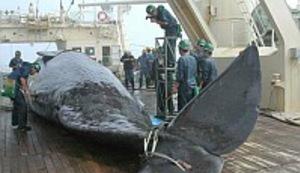 I kitove ubijaju, zar ne?