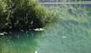 SVAKOG LJETA VALJA SE PODSJETITI NA OVAJ ZELENI SMARAGD: Zlatna ribice odvedi me na Boračko jezero