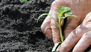 UN: Probudimo se prije nego što bude prekasno - male farme organske hrane jedini su način da prehranimo svijet