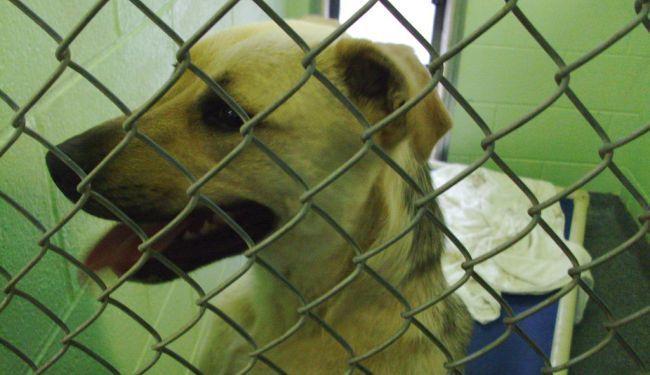 PROSVJED PRED MINISTARSTVOM: Dosta je nekažnjenog zlostavljanja životinja!