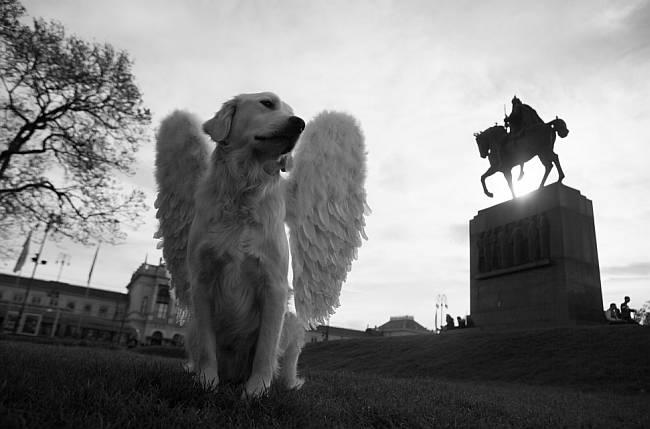 Muzej anđela