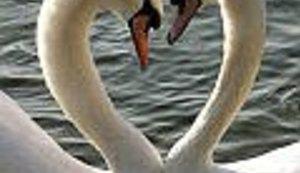 Još jedan praznik ljubavi - Valentinovo