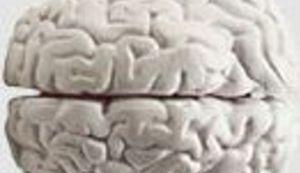 Droga mijenja mozak - ovaj put bukvalno.