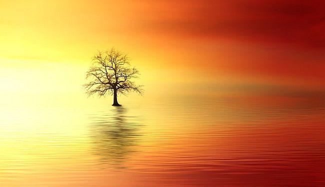 LAMENTACIJE PONEDJELJKOM: Presaditi stablo