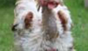 BILJEŽNICA ROBIJA K.: Doli kokoš!