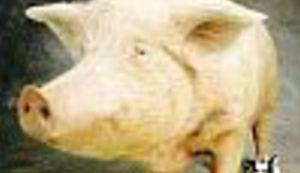 """Čovjek sa """"svinjskim cipelama"""""""