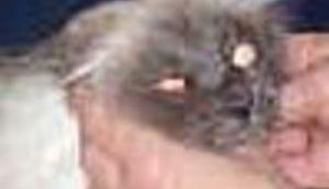 Veterina stara 83 godine