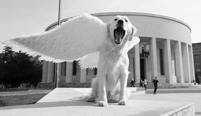 MUZEJ ANĐELA: Pas je najbolji čovjekov prijatelj, pogotovo kad je anđeo