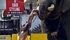 Slon ubija