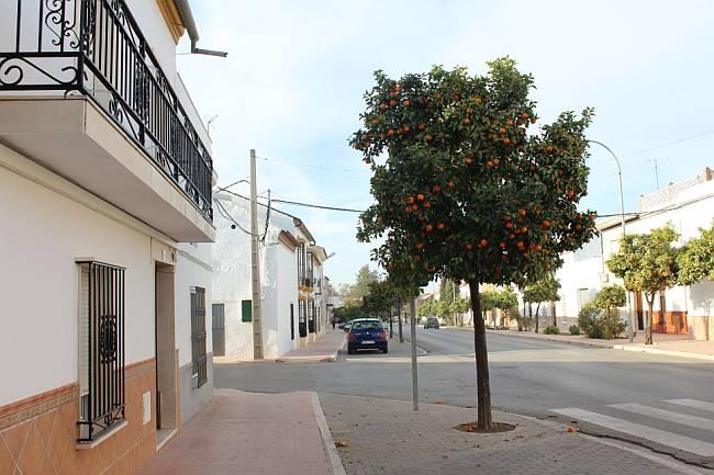 Marinaleda street