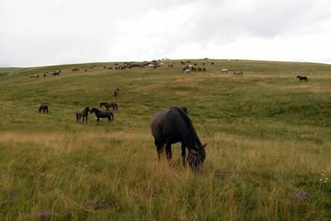 Livno - divlji konji