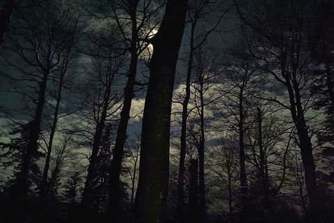 Noć pod okriljem šume