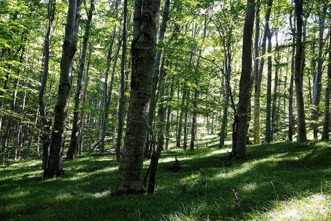 Mirne šume Velebita